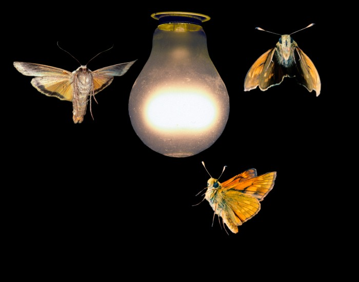Seek God as moths seek light, One's the fly reach light it never returns, it dies and become dusts.